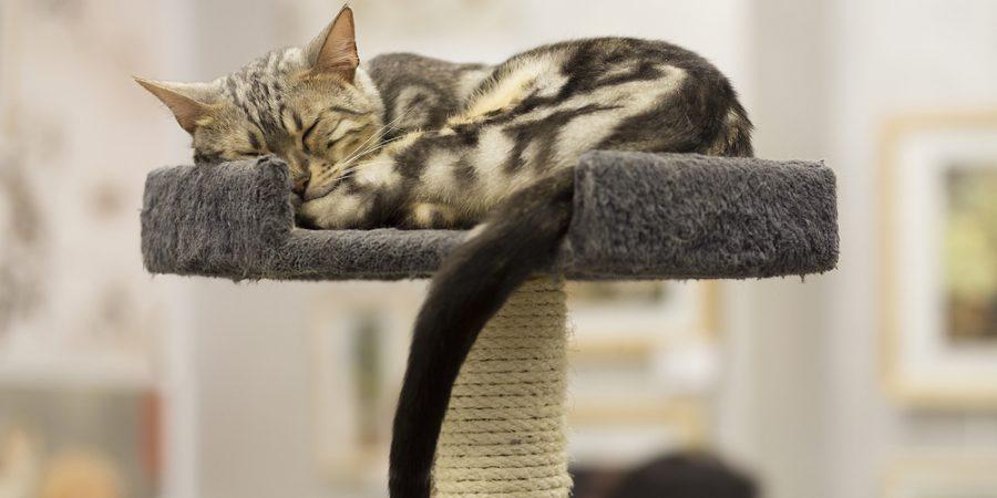 Katt sover på klösträd