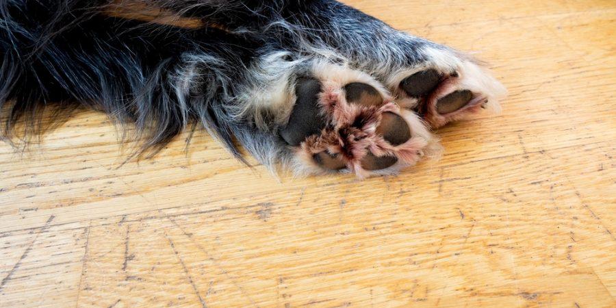 Repigt golv på grund av hundklor